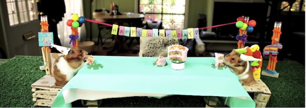 Life Lessons A Hedgehog Birthday Party Can Teach Us Happier - This cat eating a birthday cake is everything you need in life